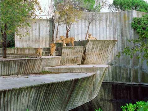 Un león y cuatro leonas en Madrid Copia Lambda sobre metacrilato con moldura de aluminio 90X120 cm. Tiraje: 5 + 1 P.A.