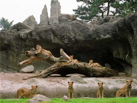 Siete leonas en Hamburgo Copia Lambda sobre metacrilato con moldura de aluminio 90X120 cm. Tiraje: 5 + 1 P.A.