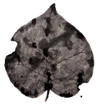 BotanicalPoems 10. 2008 Técnica Mixta sobre papel hecho a mano en China. 96 x 99 cm.
