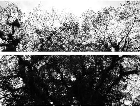 Martínez Lanz Interludio X, 2009 1/3 Impresión en papel de algodón con tintas pigmentadas 108X113 cm.