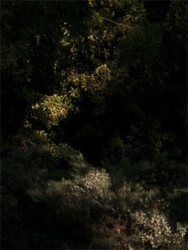 Pedro Monjardin, serie eden, 2013, S/T ,foto digital, tintas pigmentadas, 100x74 cm. 1/5
